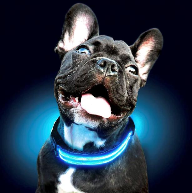 Svítící obojek - modrý S