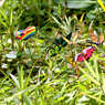 Obrázek z Zápich do květináče 24 ks - motýl