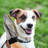 Obrázek z Vyčesávací rukavice pro psa - deluxe