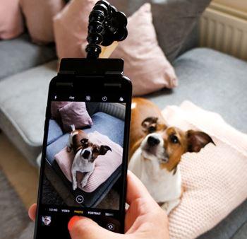 Obrázek z Pomůcka pro focení mazlíčků