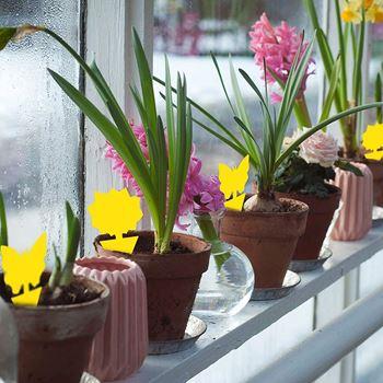 Obrázek z Ochrana rostlin před hmyzem