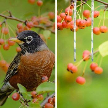 Obrázek z Reflexní páska proti ptákům